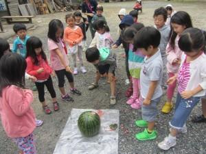 15watermelon2